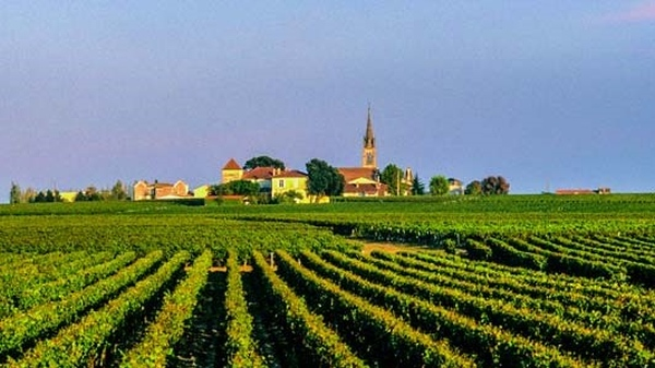No Medoc tem os melhores vinhos do Bordeaux