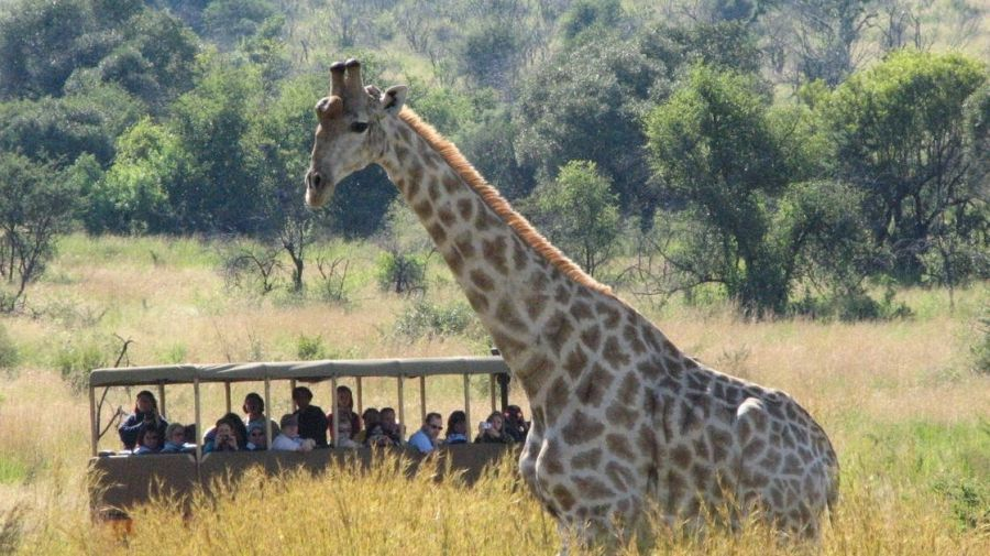 O national parque Pilanesberg lado do Sun City