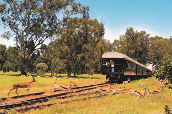 muitas experiências durante a viagem de trem Rovos Rail Safaris na África do Sul